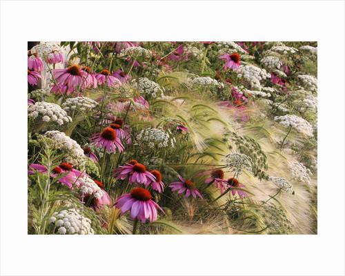 My Garden Prairie by Rosanna Castrini