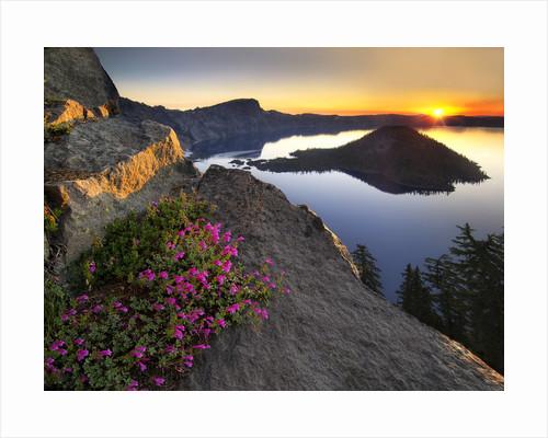 Penstemon Sunrise by Dennis Frates