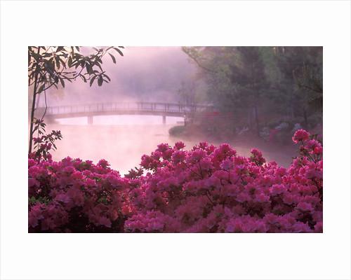 Morning Splendour by Charles Needle