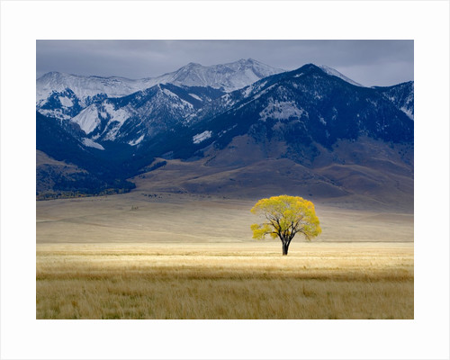 Lone Fall Tree by Dennis Frates