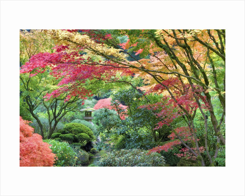 Japanese Gardens in Fall by Dennis Frates