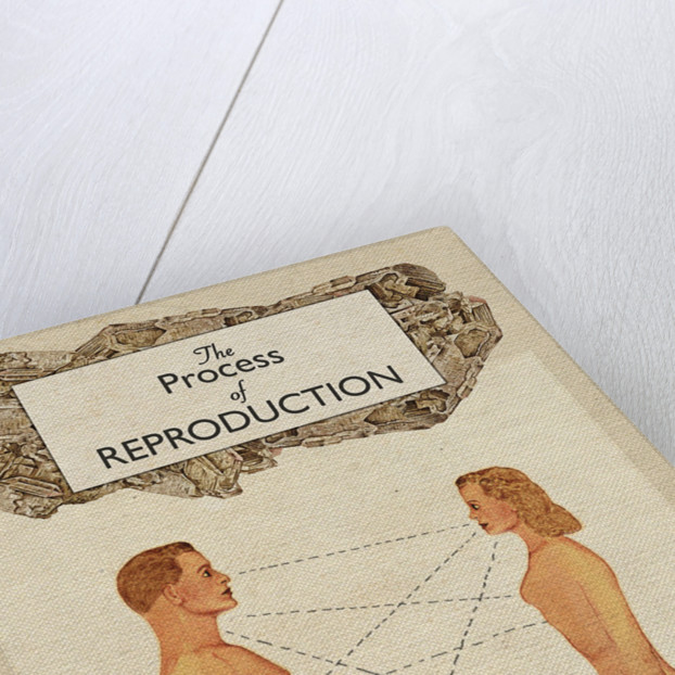 Process of Reproduction by Heather Landis