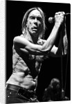Iggy Pop and The Stooges (1) by Karen Toftera