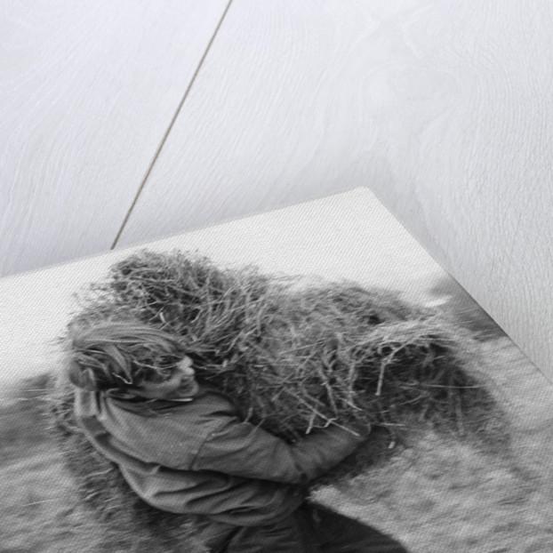 Boy carrying hay, c1960s by Tony Boxall
