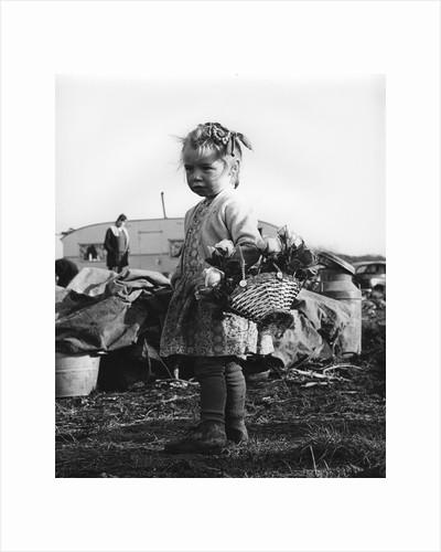 Gypsy girl, 1960s by Tony Boxall