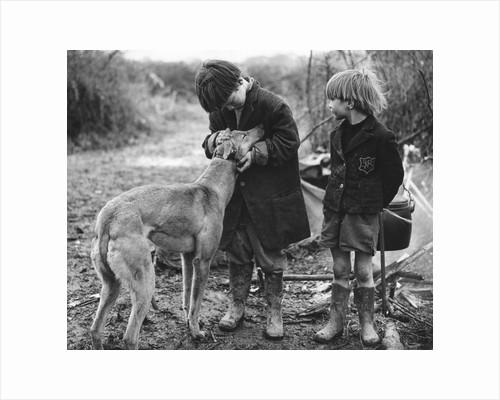 Gypsy boys with dog, Surrey, 1960s by Tony Boxall