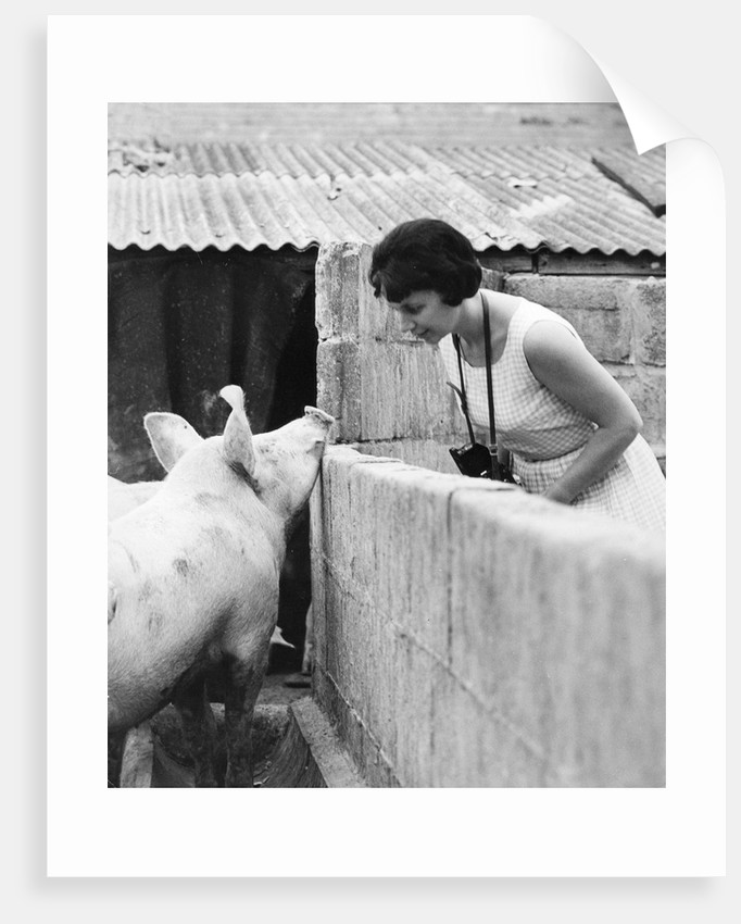 Woman and pig, 1960s by Tony Boxall