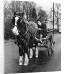 Gypsy man with horse and cart, 1960s by Tony Boxall