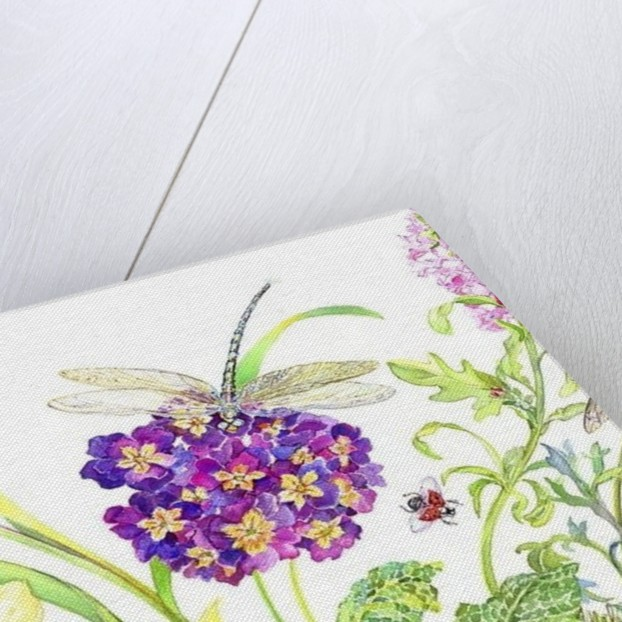 Primrose and Dragonfly by Kimberly McSparran