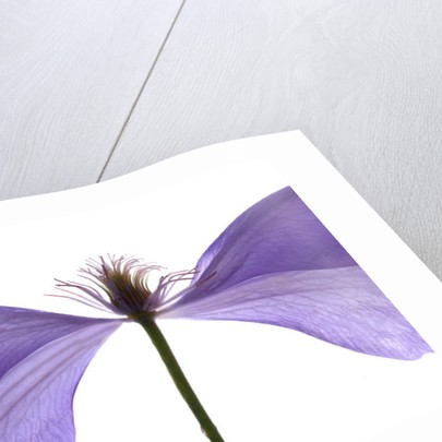 Clematis Float by Julia McLemore