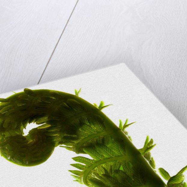 Fern Curve by Julia McLemore