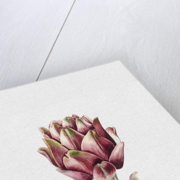 Sardinian Artichoke by Alison Cooper