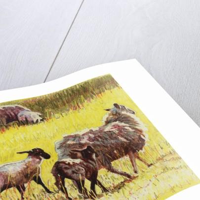 Flock by Helen White