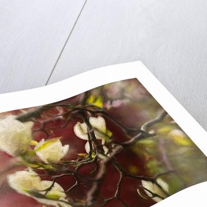 Magnolia, 2018 by Helen White