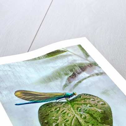 Flying visit, 2019 by Helen White