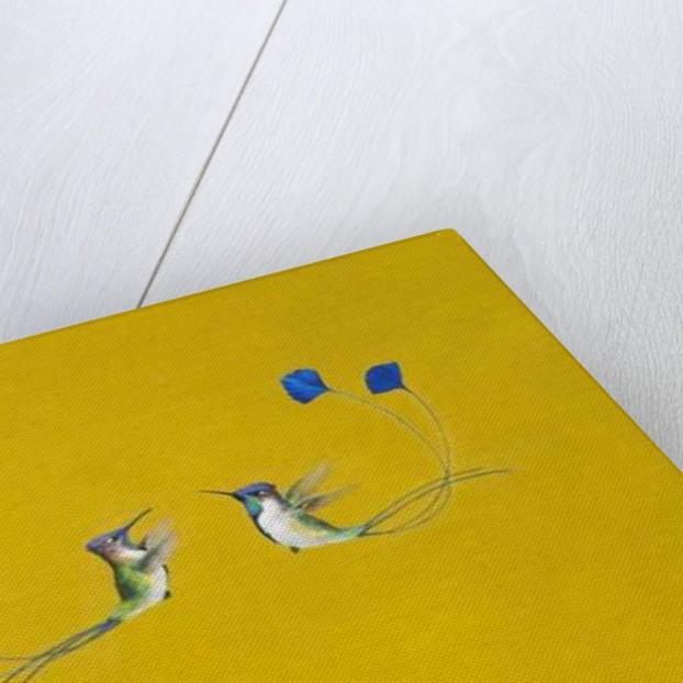 Hummingbirds by Tim Hayward