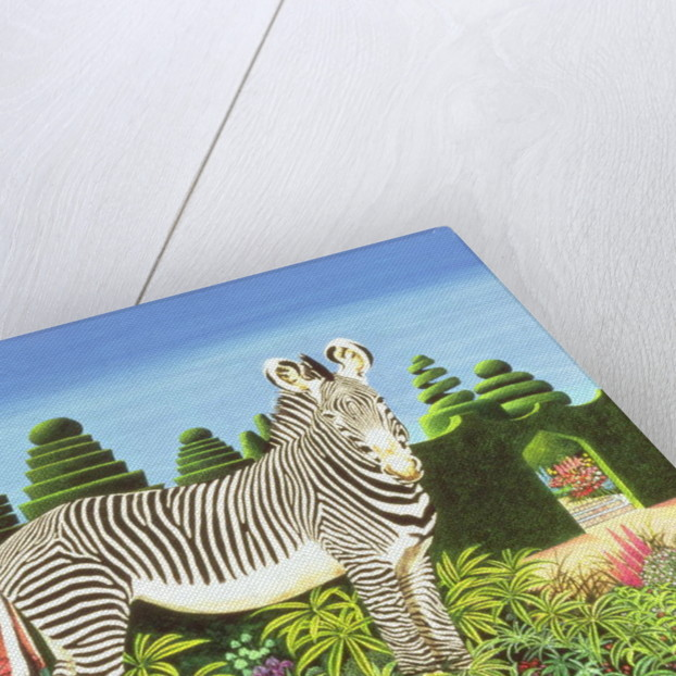 Zebra in a Garden, 1977 by Anthony Southcombe