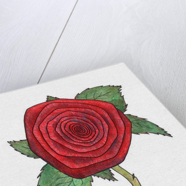 Rose 4, 2013 by Faisal Khouja