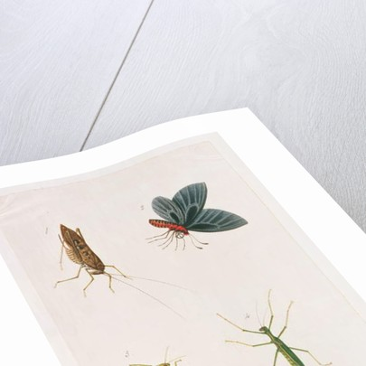 Four Insects by Chinese School