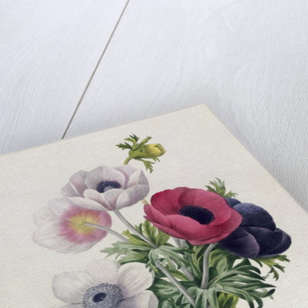 Anemone: Simple by Pierre Joseph Redoute