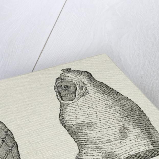 Peruvian Mummies by English School