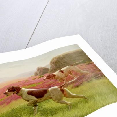 Pointers in a Landscape by Harrington Bird
