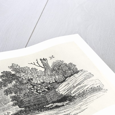 Fox escaping by Thomas Bewick