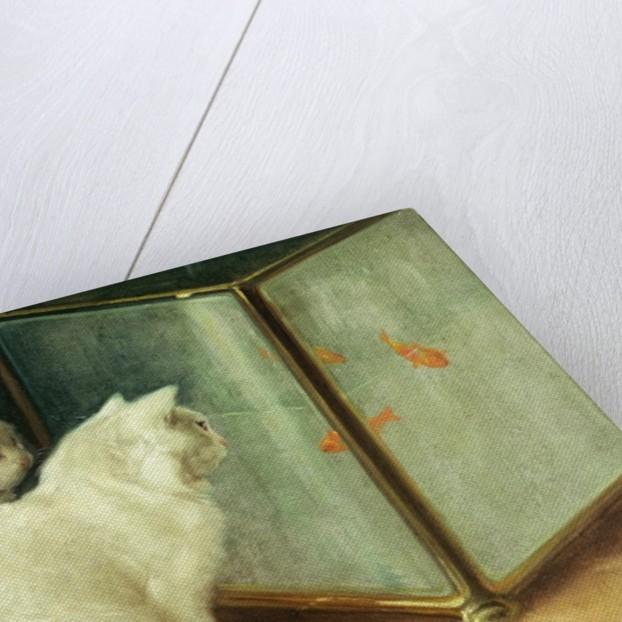 White Cats Watching Goldfish by Arthur Heyer