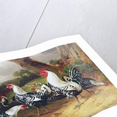 Cockerels in a Landscape by William Joseph Shayer