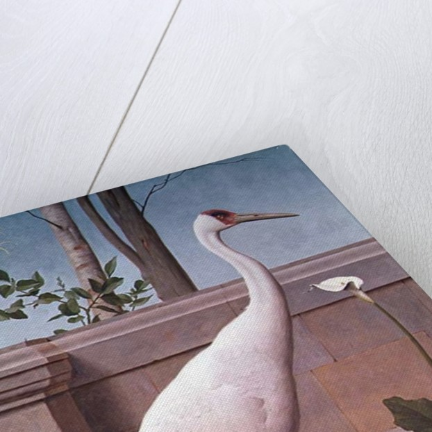 Indian Crane, Cockatoo, Bullfinch and Thrush by Henry Stacey Marks