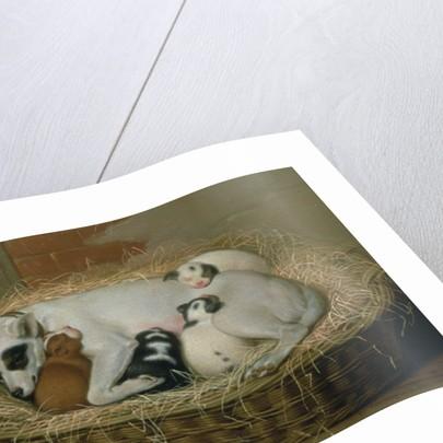 Bitch with her Puppies in a Wicker Basket by Samuel de Wilde