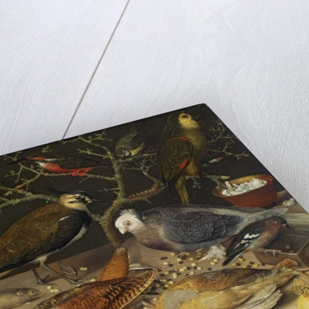 Still Life of Birds and Insects by Georg Flegel