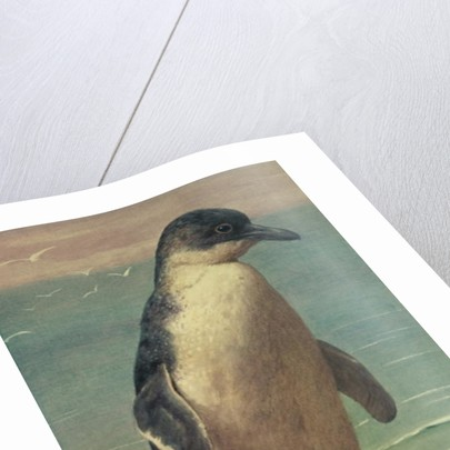 Study of a Penguin by Henry Stacey Marks