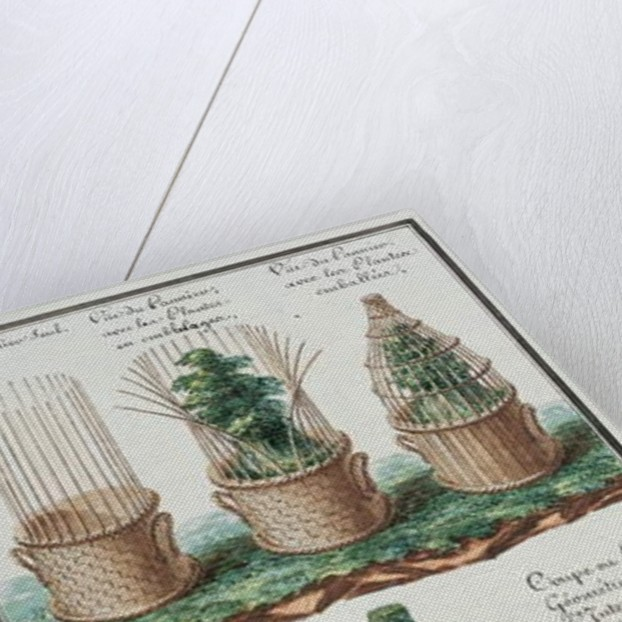 Illustration of a woven basket for transporting plants by Gaspard Duche de Vancy