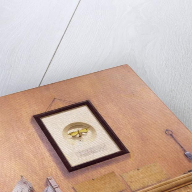 Trompe l'Oeil Still Life by English School