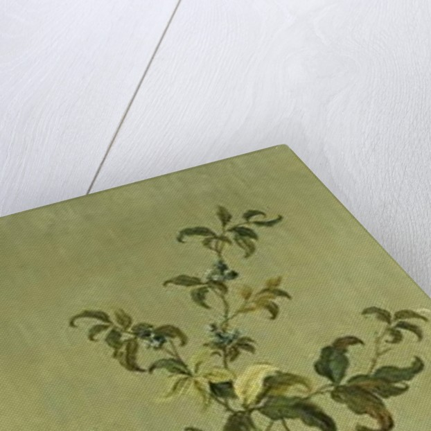 Decorative Panels with Flowers by Jean Baptiste Pillement