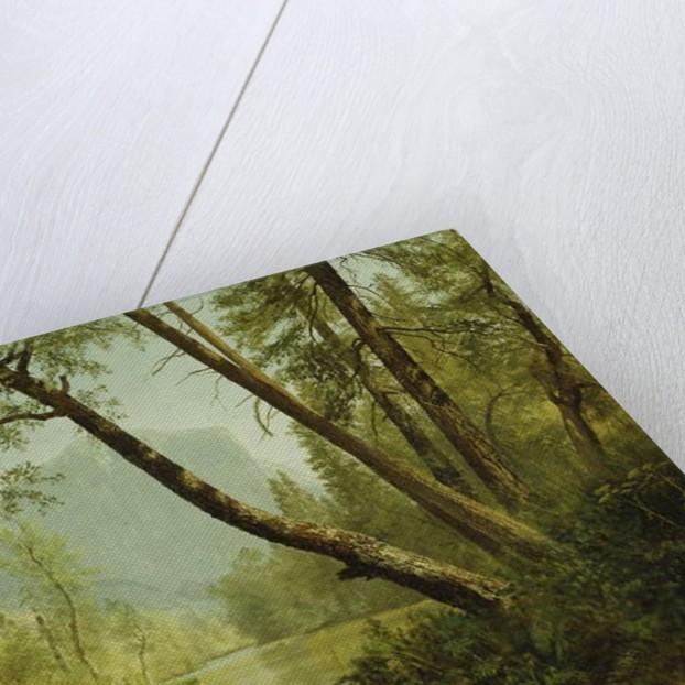 Sunlit Forest by Albert Bierstadt
