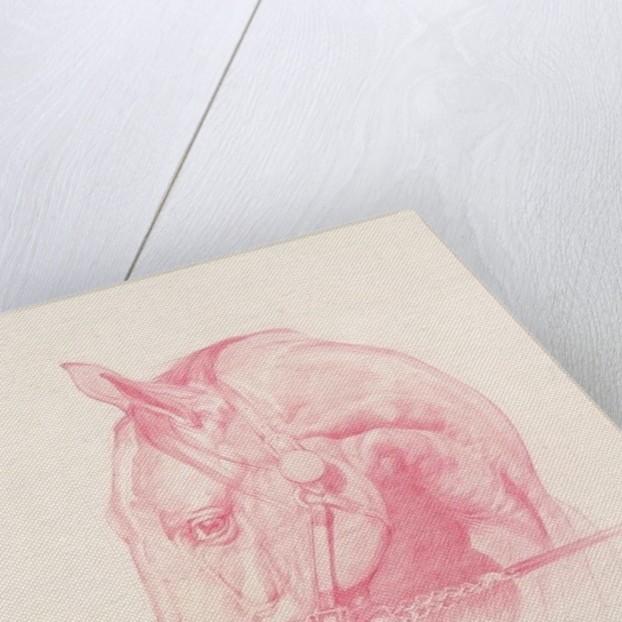 Portrait Head by Emma Kennaway
