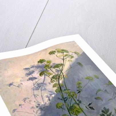 Lovage Against Diagonal Shadows by Timothy Easton