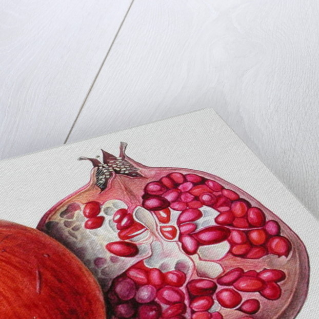 Pomegranate, 1995 by Margaret Ann Eden