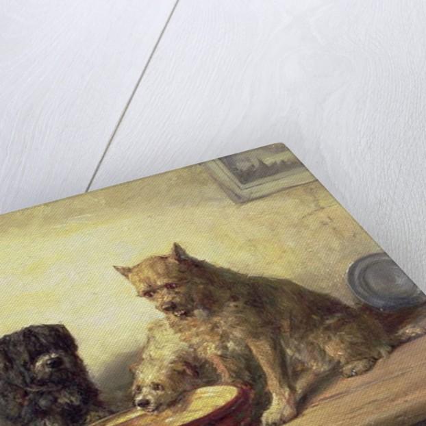Bone of Contention, 1878 by Charles van den Eycken