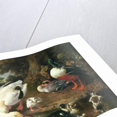 Farmyard ducks by Melchior de Hondecoeter