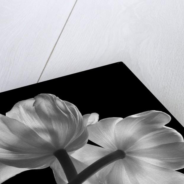 Transparent Foundation, 2006 by Hiroyuki Arakawa