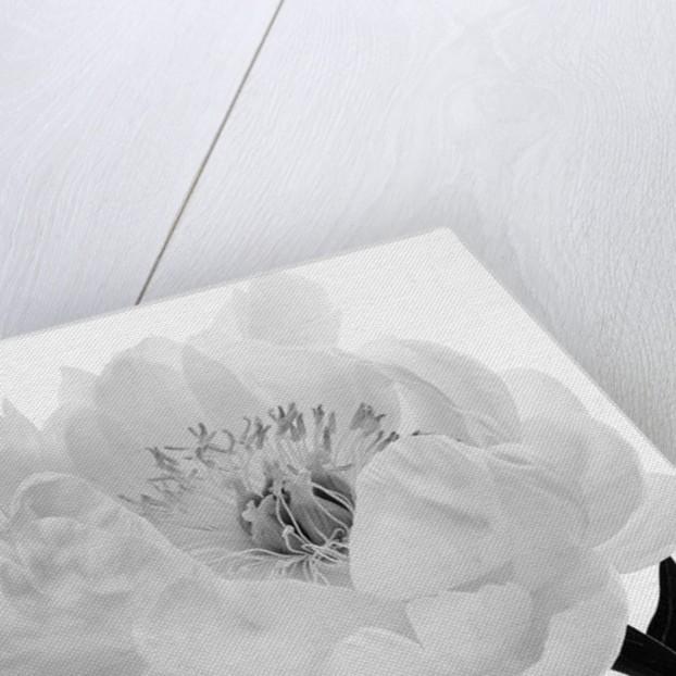 The Inside Of Self, 2007 by Hiroyuki Arakawa