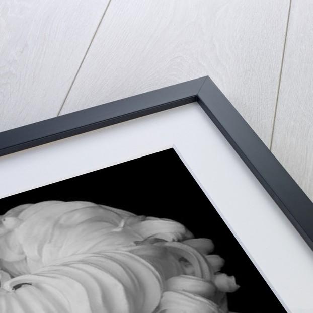 Amadeus, 2009 by Hiroyuki Arakawa