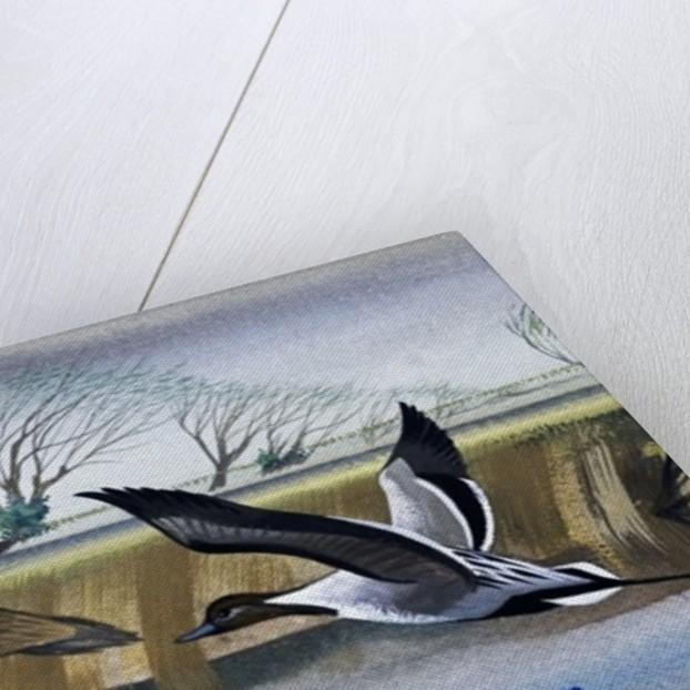 Ducks in flight by English School