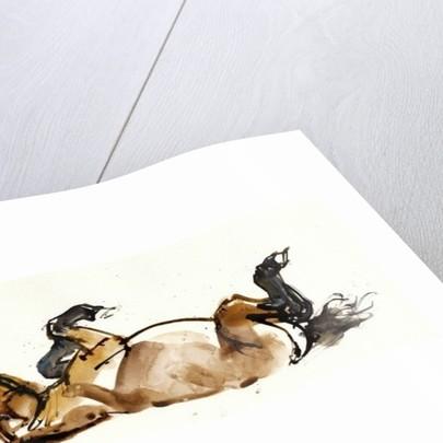 Rolling Horse (Przewalski) by Mark Adlington