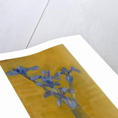 Irises, c.1910 by Piet Mondrian