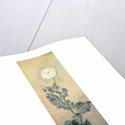 White Poppy, 1883 by Claude Monet