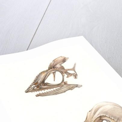 Chameleon and Bird Skull by Rachel Pedder-Smith